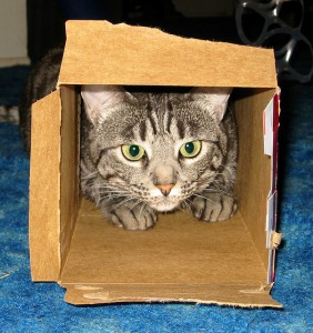 Cat in the Box — admiller/CC BY 2.0