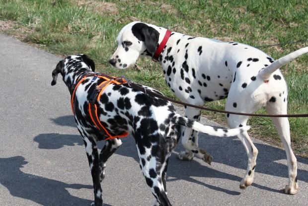Image harnais et collier chien