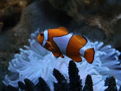 Comprendre la respiration des poissons en 5 minutes chrono