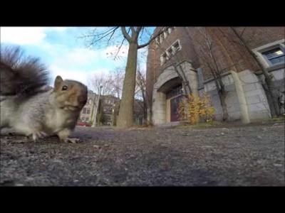 Un écureuil vole une caméra et l'emporte dans un arbre