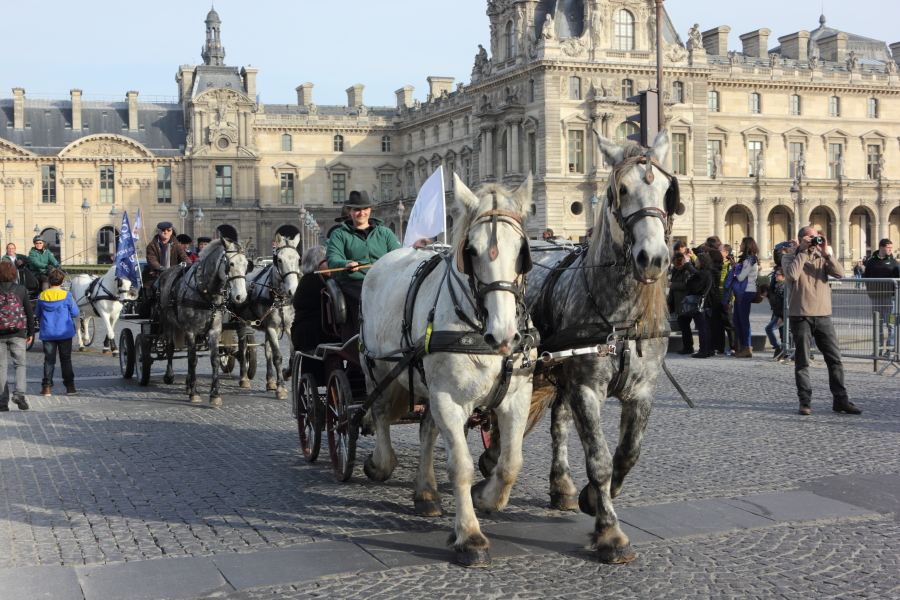 D 233 Fil 233 De Chevaux 224 Paris Pour Le Lancement Du Salon Du Cheval