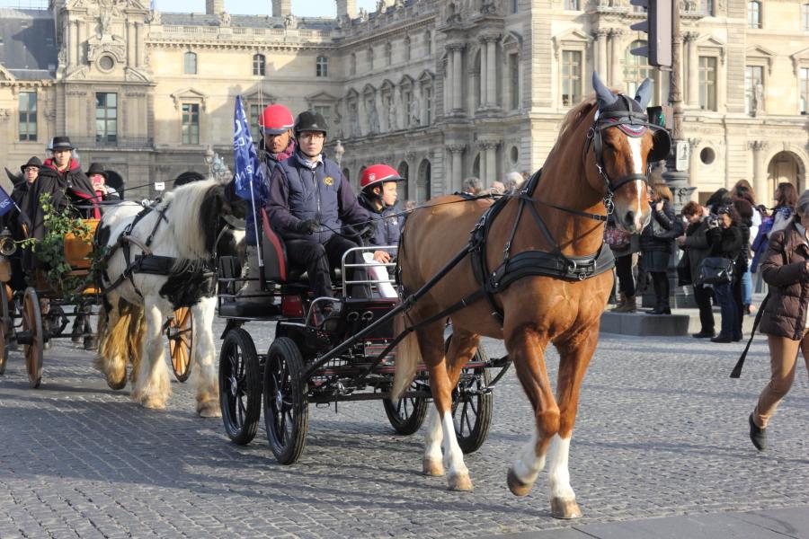D fil de chevaux paris pour le lancement du salon du cheval for Salon du cheval paris 2018