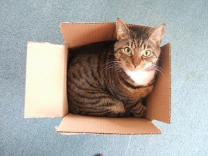 Photo : Large cat, small box