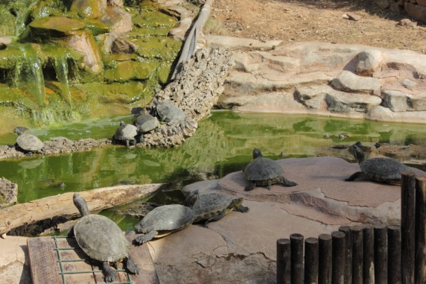 Le parc abrite différentes espèces de tortues